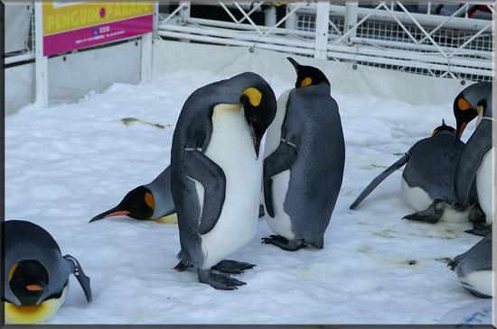 ペンギン4.jpg