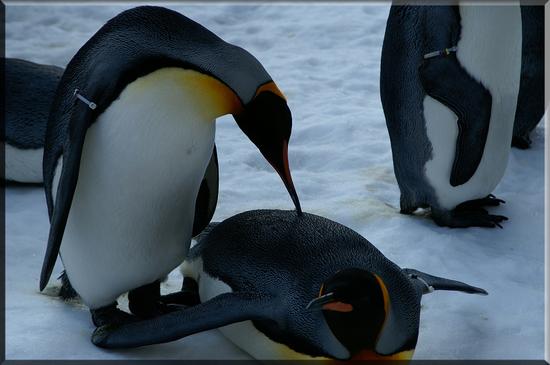 ペンギン2.jpg