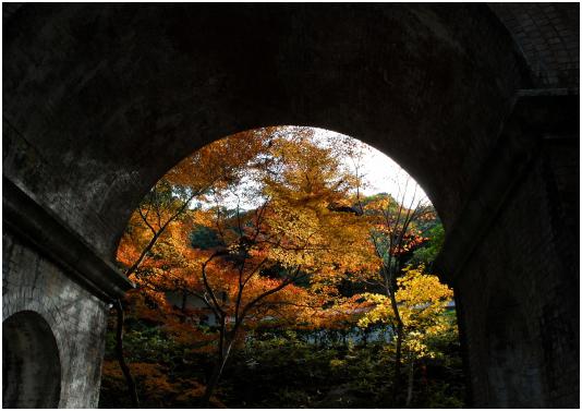 20111204-○DSC_0664 切り抜き.jpg